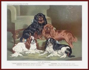 1v  Toy Spaniels (V.Shaw 1881)
